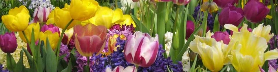 Tulips Lilies etc
