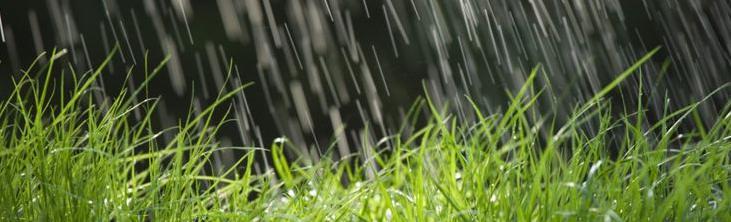rain-on-grass