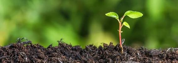 New Beginnings Banner Plant
